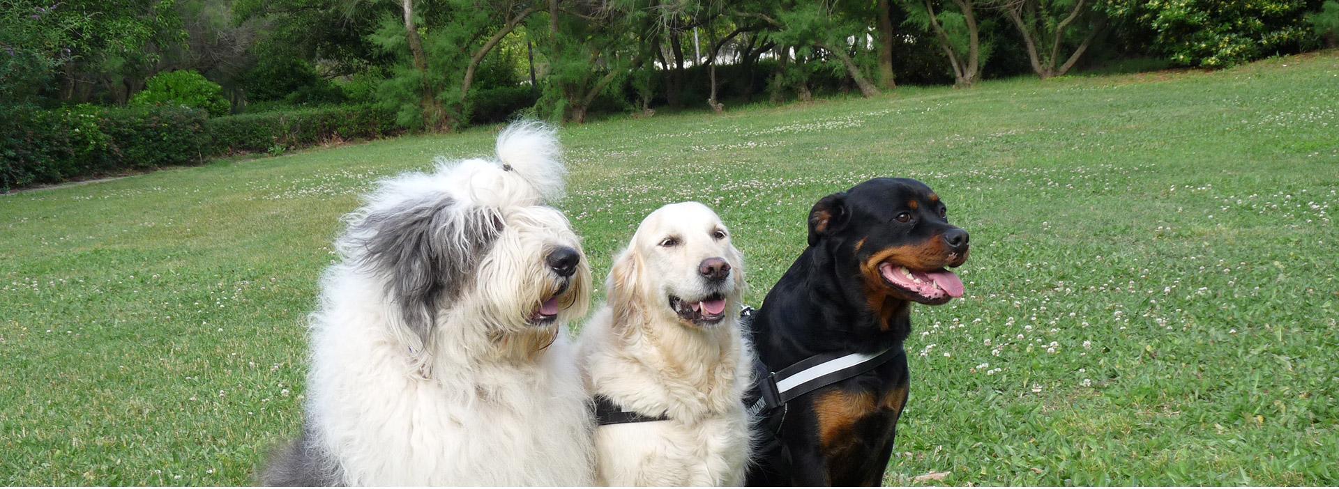 Garde de chien à domicile Hérault - animove9